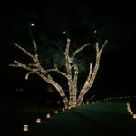 Wrapped Tree Lighting installed by Dallas Landscape Lighting