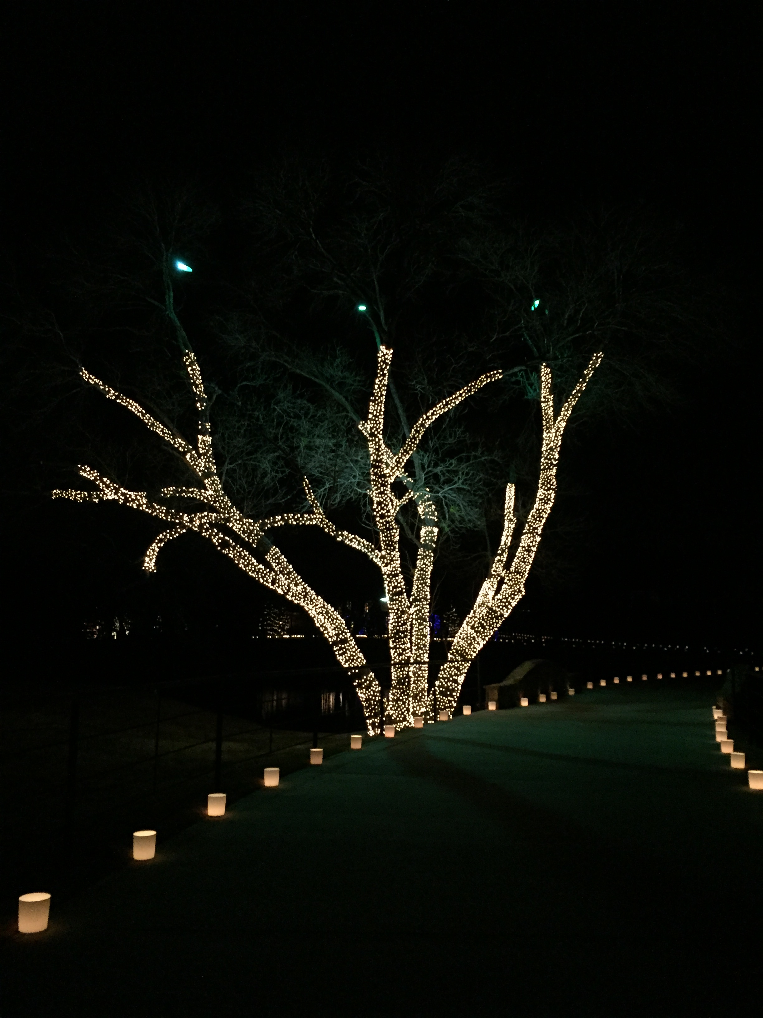 Highland park outdoor lighting dallas landscape lighting wrapped tree lighting installed by dallas landscape lighting mozeypictures Images