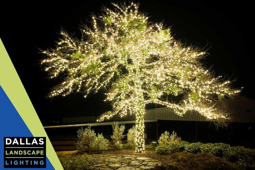 Wrapped Tree Lighting Installation