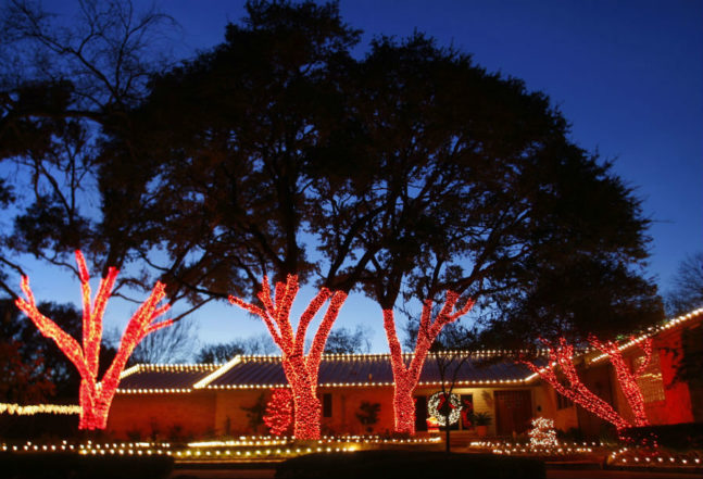 Trees Wrapped Red Christmas Lights Dallas