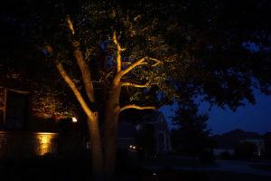 tree lighting Frisco landscape lighting