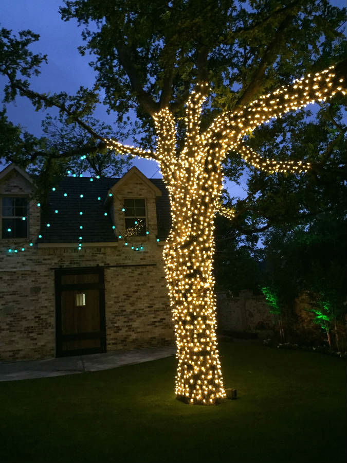 tree lights wrapped dallas landscape lighting