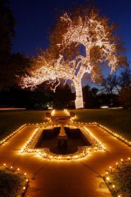 Wrapped Tree Lights Dallas Christmas String Lighting