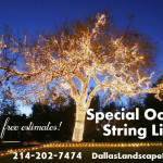 party lighting string lights tree Dallas